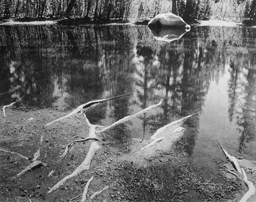Ansel Adams - Roots & Pool Near Tanaya Lake, Yosemite, 1955