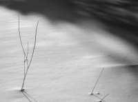Snow and Twigs, Eagle Harbor, 2015