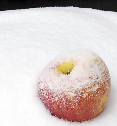Apple in the Snow, 2008