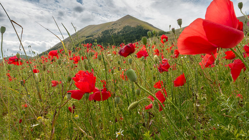 Castelluccio, Norcia, Umbria, 2014 - Photograph by Jeff Curto